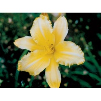 daylilies: CREEPY CRAWLER