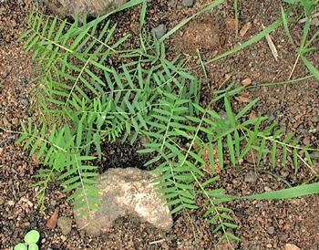 Identifying Weeds In The Garden