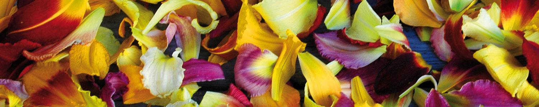 Mass-petals-wide-