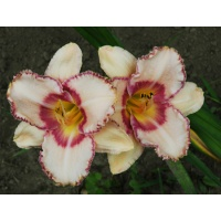 daylilies: NEW QUEST